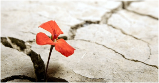 Adversity Flower in Concrete